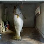 Big-Fish-List-Picture-Stunning-Garage-Door-Decals-Design-Ideas