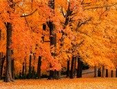 Tips to Get Your Home Fall-Ready