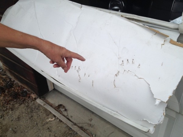 Bear Attacks Garage Door in Naramata